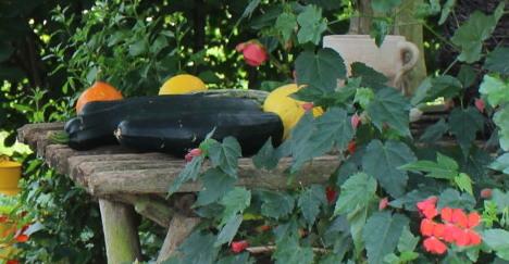 z ogrodu do kuchni, coś smacznrgo z ogrodu