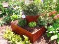 krzewy i drzewa do małego ogrodu,  ogrodnik-amator, kompozycje ogrodowe, aranżacje ogrodowe, rabaty, skrzynie z iglakami