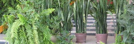 pielęgnacja roślin doniczkowych, pielęgnacja kwiatów pokojowych