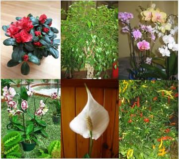 GALERIA roślin pokojowych, ZDJĘCIA