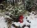 rośliny na zimę, zimowy ogród, zima w  ogrodzie, ogród zimą,  rośliny do ogrodu, dodatki ogrodowe,  zdjęcia, galeria ogrodowa, zdjęcia ogrodów, ogród ozdobny