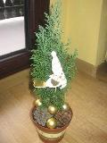 świąteczne aranżacje, ozdobne aranżacje, zimowe dekoracje, zdjęcia ogrodowe,  galeria ogrodowa, cyprys jako drzewko świąteczne