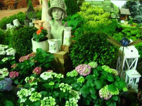 rożnokolorowe hortensje, hotrensja ogrodowa