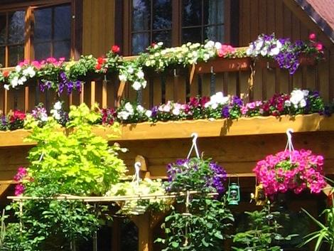 balkony i tarasy, ukwiecony balkon, rośliny