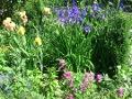 czerwiec w ogrodzie, zabiegi przeprowadzane w czerwcu, wysiew nasion w czerwcu, cięcie drzew i krzewów, rośliny pielęgnacja w miesiącu czerwcu, czerwcowy ogród, ogrodnik, czerwcowe kwiaty, galeria ogrodowa