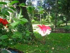 Rośliny Na Miejsca Cieniste Ogrodnik Amatoruprawa Ogrodu