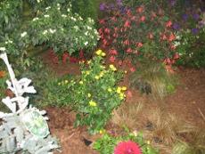 Ogrodnik Uprawa Ogrodu Ogród Rośliny Egzotyczne Na