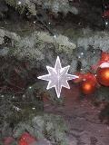 dekoracje świąteczne, galeria świąteczna, iglaki na choinke bożonarodzeniową, dodatki ogrodowe,  galeria ogrodowa