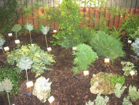 rośliny iglaste, dzrewa iglaste, krzewy iglaste, kompozycje ogrodowe,  galeria ogrodowa , wykorzystanie iglaków w ogordzie