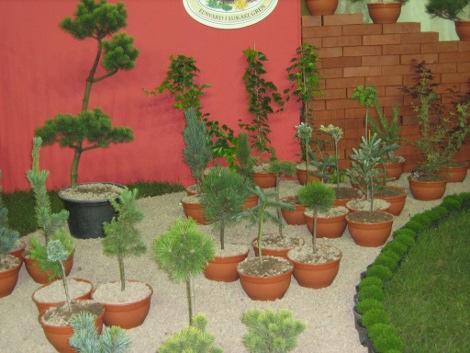 drzewa i krzewy iglaste do ogrodu