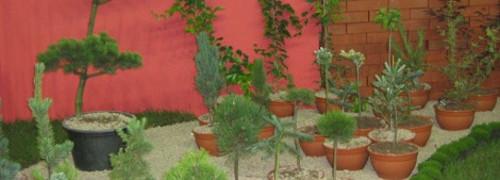 Ogrody, rośliny iglaste, iglaki