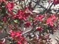 ogr�d ozdobny , drzewa, jab�o� purpurowa
