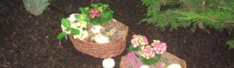 gleba KWAŚNA a w ogrodzie