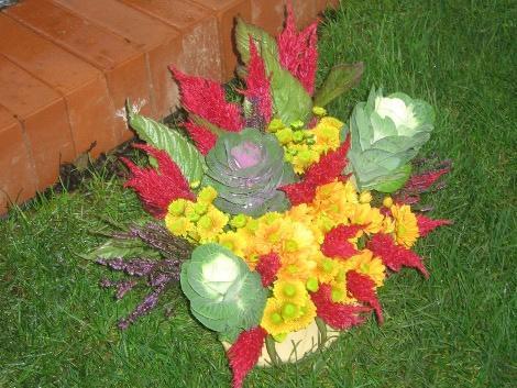 kwiaty lata i jesieni , kwiaty do ogrodu, złocienie