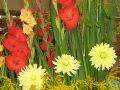 letnie kwiaty cebulowe i bulwiaste