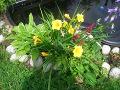 lipiec w ogrodzie, prace ogrodowe w lipcu
