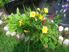 kwiaty lipca, kwiaty ogrodowe, kwiaty do ogrodu,  lipiec w ogrodzie, zabiegi przeprowadzane w lipcu, ogród w lipcu, oczko wodne, cięcie drzew i krzewów, rośliny pielęgnacja w miesiącu lipcu, czerwcowy ogród, ogrodnik