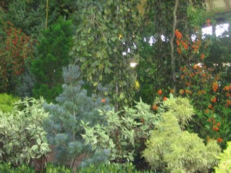 drzewa do małych ogrodów, drzewo ozdobne, niewielkie drzewa