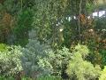 drzewa do małego ogrodu, małe ogrody