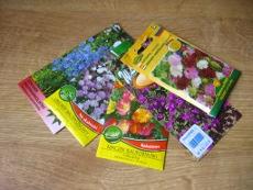 Zakup I Wysiew Nasion Terminy Wysiewu Roślin Ozdobnych