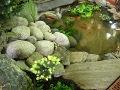 dodatki ogrodowe, oczko wodne, rośliny wodne, rośliny do oczka wodnego, galeria ogrodowa