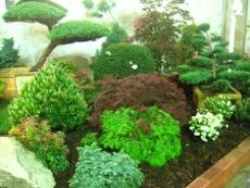 drzewa i krzewy iglaste, ogrodnik, ogród, iglaki w ogrodzie, iglaste rośliny, kompozycje ogrodowe