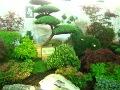 ogrodnik - amator, ogród japonski, ogrody w stylu japonskim