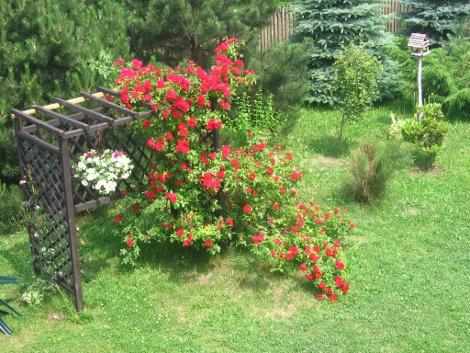 dodatki ogrodowe, pergola, kompozycje ogrodowe