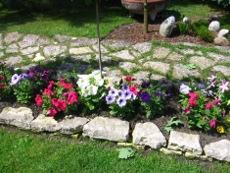 petunie ogrodowe, różnokolorowe petunie