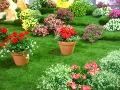 dodatki ogrodowe, ozdobne donice, kwiaty doniczkowe, pelargonie, surfinie, wilczomlecze rośliny na balkony i tarasy, aranżacje ogorodowe, galeria ogrodowa
