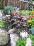 ogrodnik -  skalniak, rośliny na skalniak zakładanie skalniaka