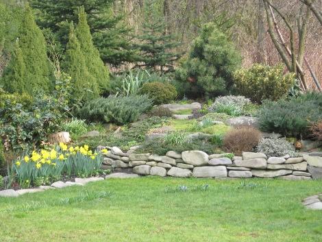 projekt skalniaka, urządzanie  ogrodu, skalniak, strumyk, woda i skały z drzewami i krzewami ozdobnymi,  alpinarium, pomysł na ogród ogrodu, aranżacje z roślin, galeria ogrodowa
