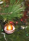 ogród, ogrodnik, wybor choinki świątecznej, drzewko w pojemniku