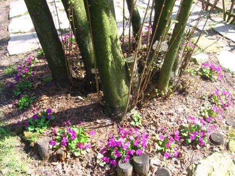Ogrodnik-amator  Uprawa ogrodu  Galeria ogrodowa, zdjęcia