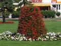 dodatki ogrodowe, kwiaty balkonowe, klomyby, kompozycje florystyczne, galeria ogrodow