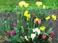 wiosenny ogród, wiosenna rabata z roślinami cebulowymi, galeria ogrodowa
