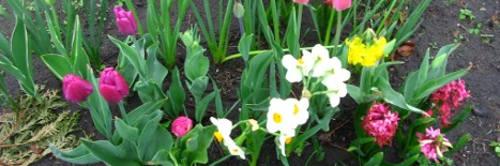 Ogrody, cebulki, rośliny cebulowe i bulwiaste