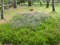 dodatki ogrodowe, wrzosowisko, kompozycje ogrodowe, galeria ogrodowa