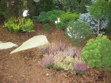 iglaki i wrzosy, krzewy w ogrodzie, aranżacje z roślin ozdobnych, kompozycje ogorodowe, dodatki ogrodowe,  galeria ogrodowa