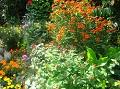 rośliny, letnie kwiaty, ogród latem,  rośliny do ogrodu, dodatki ogrodowe, kwietniki, zdjęcia, galeria ogrodowa, zdjęcia ogrodów, ogród ozdobny