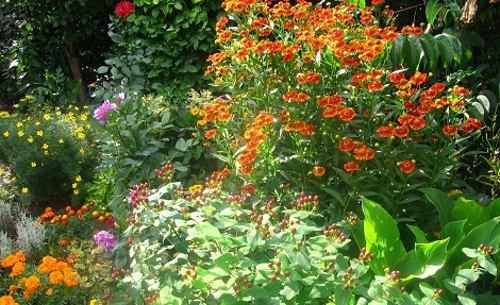 lato w ogrodzie, koniec lata, początek jesieni, rośliny do ogrodu, wrzesień  w ogrodzie kalendarz ogrodnika, ogrodnik-amator.pl