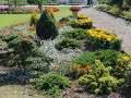 ogród ozdobny, aksamitki, krzewy iglaste, ozdobne rabaty, zdjęcia ogrodów, galeria ogrodowa