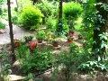 ogrodnik -  rośliny ozdobne do cienia