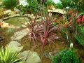 rośliny doniczkowe, aranżacje, ogród, urządzanie ogrodu, aranżacje z roślin, galeria ogrodowa