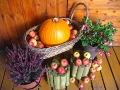 urządzanie  ogrodu, dekoracje ogrodowe, jesienne dekracje z dyni, aranżacje florystyczne, galeria ogrodowa