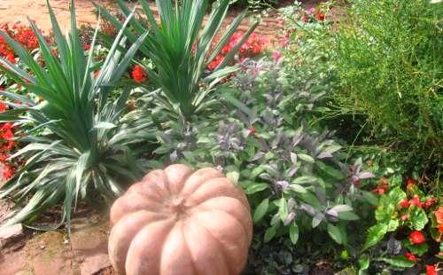 ogród , rośliny do ogrodu październik w ogrodzie kalendarz ogrodnika, ogrodnik-amator.pl, początek jesieni, rośliny do ogrodu, październik  w ogrodzie kalendarz ogrodnika, ogrodnik-amator.pl