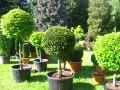 wystawa Park ślaski, formowane drzewa i krzewy, rośliny ozdobne, aranżacje, ogród, urządzanie ogrodu, aranżacje z roślin, galeria ogrodowa
