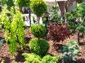 urządzanie  ogrodu , małe drzewa formowane iglaki, dodatki  ogrodowe, galeria ogrodowa, ogród ozdobny