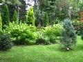 zdjęcia ogrodów, dodatki ogrodowe, iglaki, krzewy ozdobne, hortensje bukietowe, galeria ogrodowa