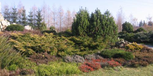 ogród , rośliny do ogrodu grudzień w ogrodzie kalendarz ogrodnika, ogrodnik-amator.pl